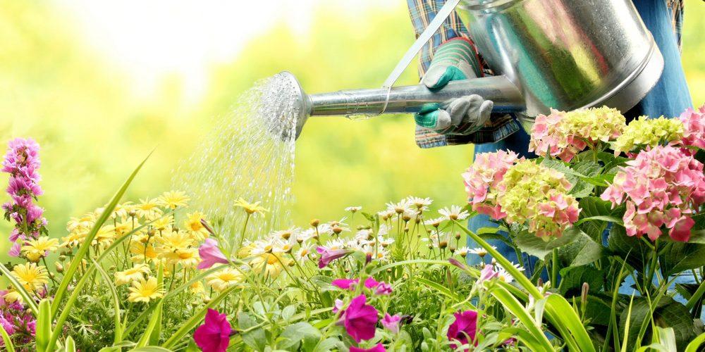 Os pais como jardineiros